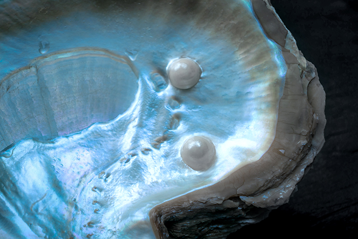 Pearl Jewellery pearl oyster 3